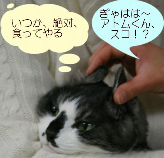 シマ助ちゃん、元気で、お幸せに_d0085254_2353295.jpg