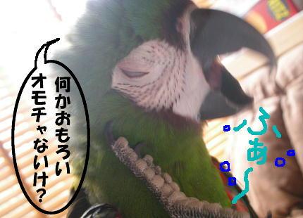 f0132055_2247933.jpg
