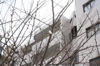 桜!開花~♪_d0082356_10242947.jpg