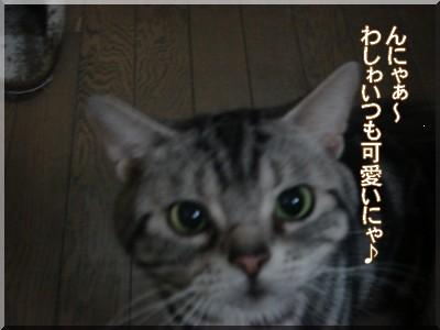 b0078073_22462790.jpg