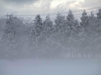 春の雪、再び・・・_c0107612_9214739.jpg