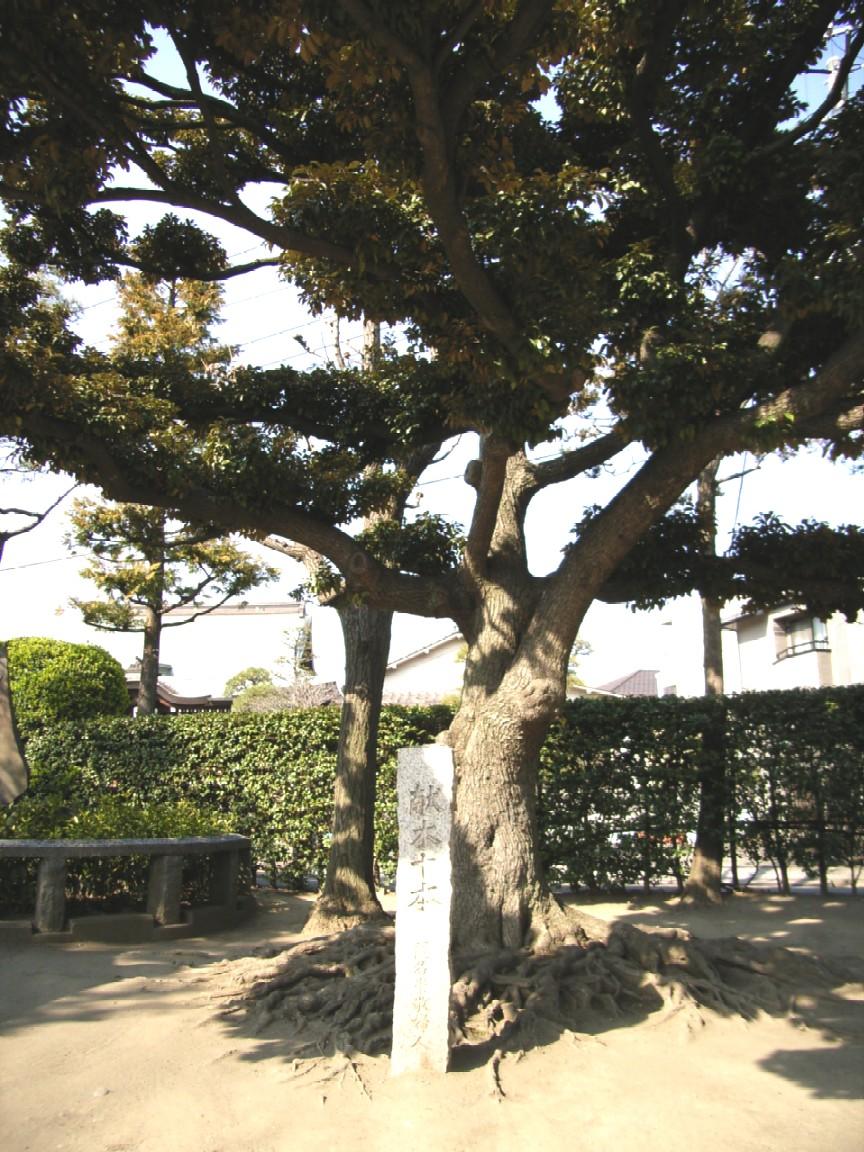 東京は都会だ_d0091021_2247471.jpg