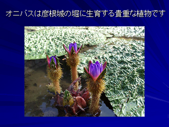 d0087325_1911072.jpg
