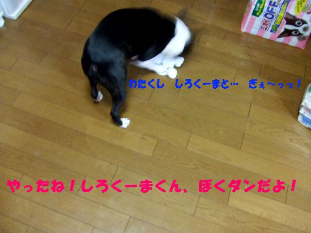 f0059334_9502481.jpg
