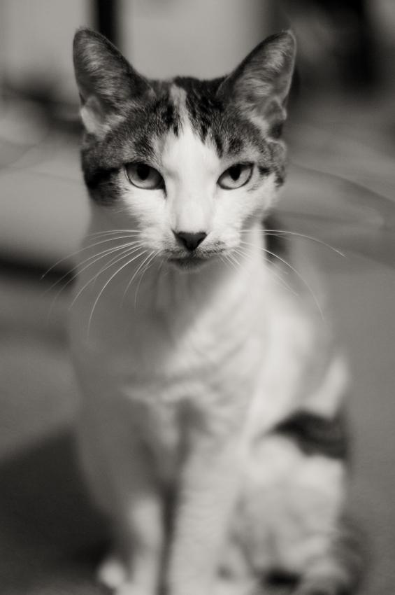 愛猫_a0049142_815418.jpg