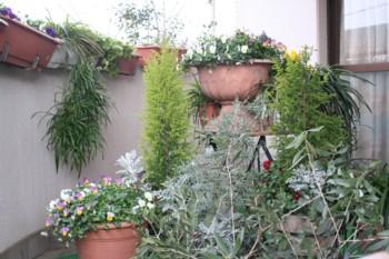 我が家のバルコニー~♪春いっぱい♪~_d0082356_915254.jpg