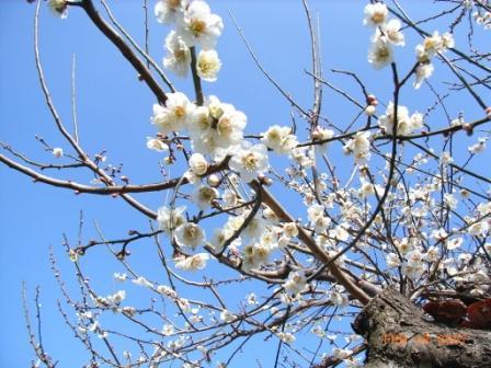 春ですね~_e0003660_163299.jpg