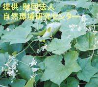 f0104277_6394455.jpg