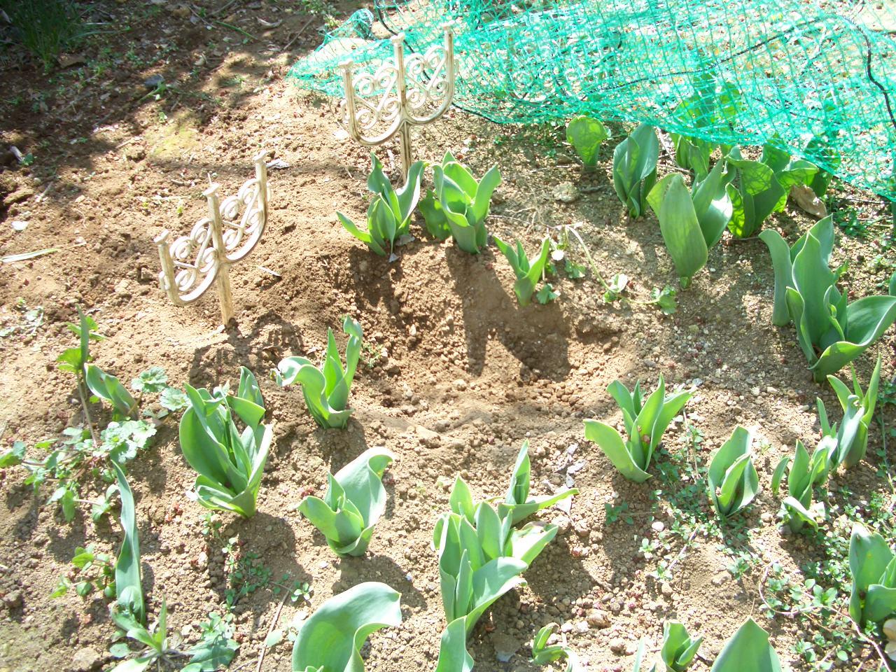 久々にお庭で_f0101201_17531080.jpg