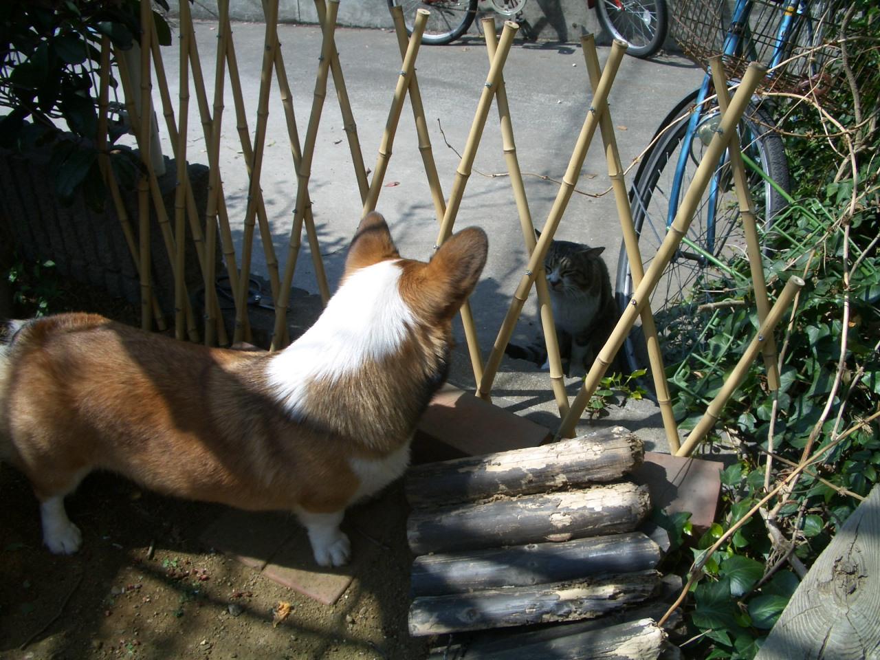 久々にお庭で_f0101201_181228.jpg