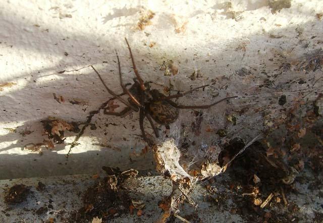 プランターの後ろに住んでいる蜘蛛_b0025008_2157351.jpg