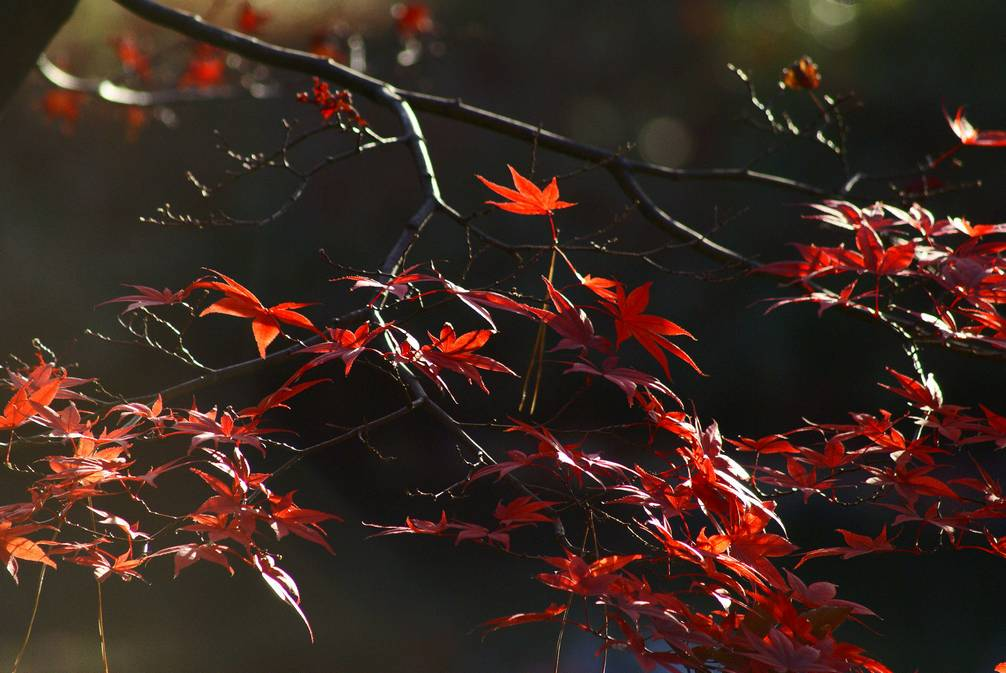 秋の有栖川公園#2_d0086248_14465117.jpg