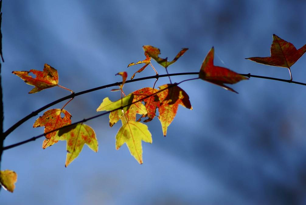 秋の有栖川公園#2_d0086248_14472850.jpg