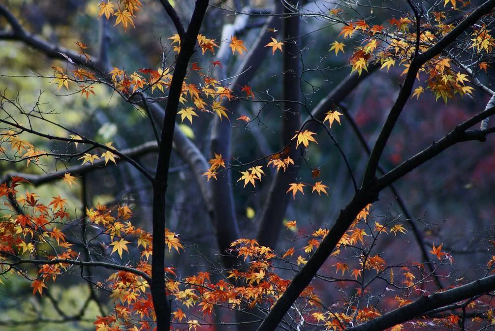 秋の有栖川公園#2_d0086248_14474272.jpg