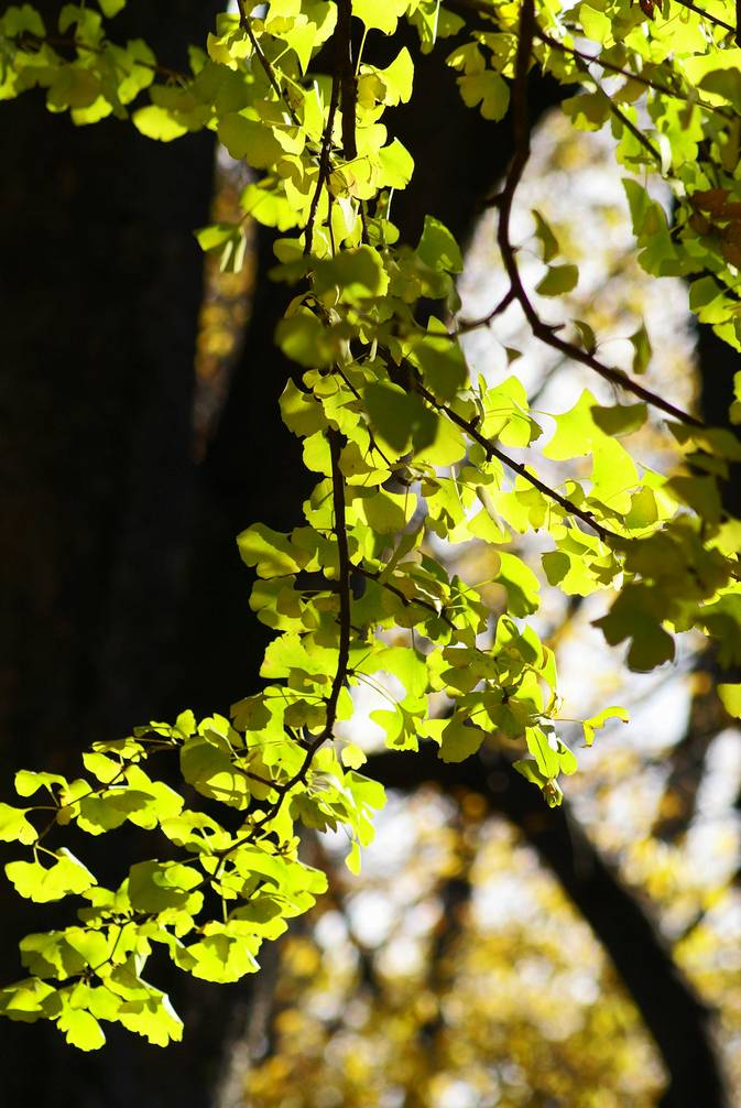 秋の有栖川公園#2_d0086248_14475062.jpg