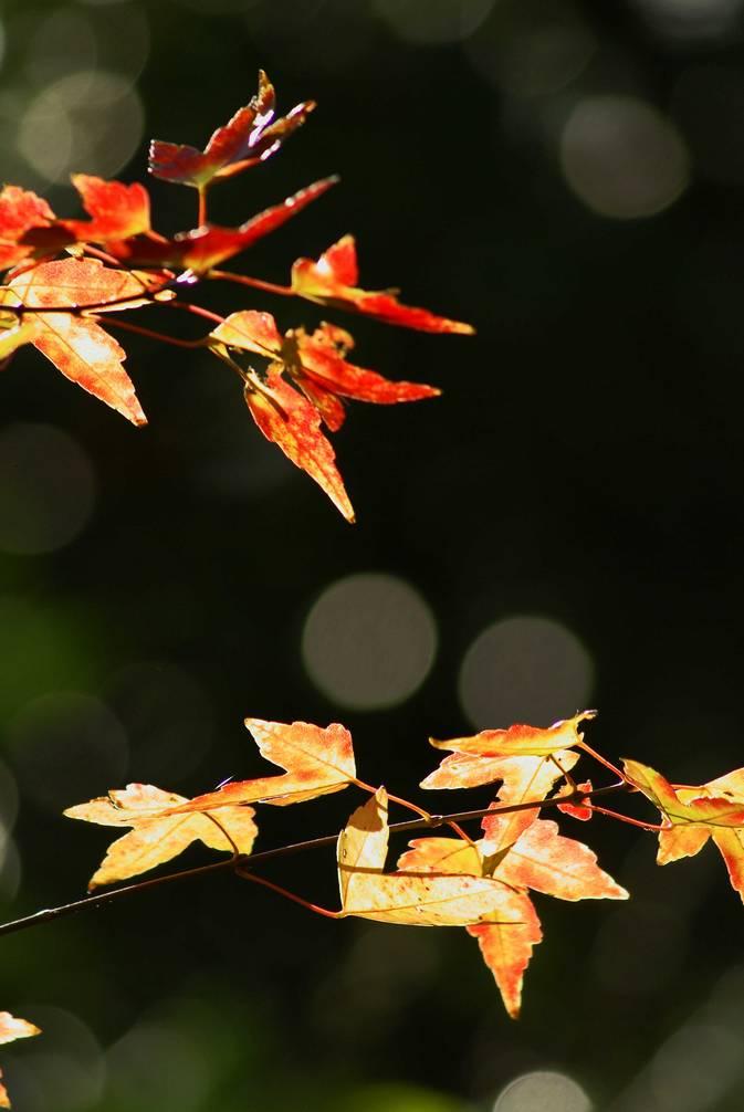 秋の有栖川公園#2_d0086248_144797.jpg
