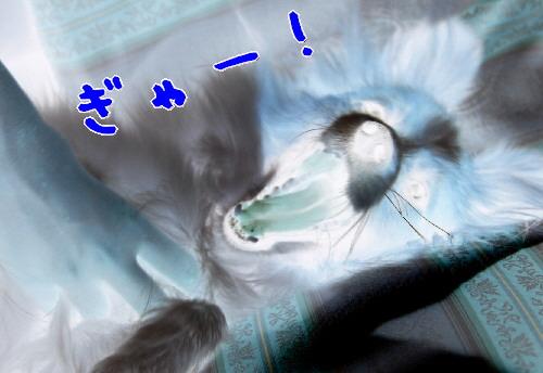 d0013149_1481855.jpg