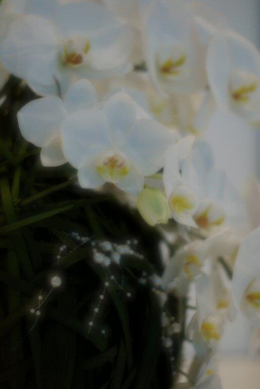 f0002701_644938.jpg