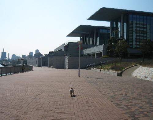 川のような海沿いを颯爽と歩くラッキー。ラッキーの向こうに見えているのが美術館。そこの2階のカフェ目指してまっすぐに歩いているようです。