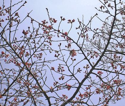 3月22日 ぽっちりと・・・_a0001354_17361867.jpg