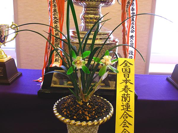 ◆全国日本春蘭連合会・第34回春季展示大会    No.30_d0103457_144910.jpg