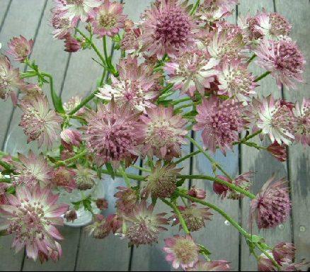 オークリーフ(桜の蕾も膨らんで)_f0049672_12163427.jpg