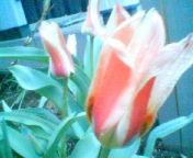 ピンクの熟女!_a0053480_17564518.jpg