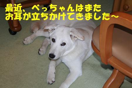 f0121712_16461828.jpg