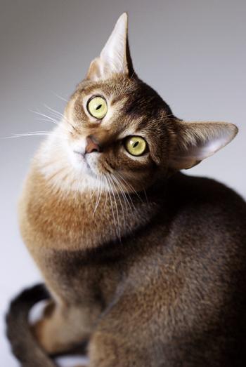 [猫的]レコードを指揮する_e0090124_8344688.jpg