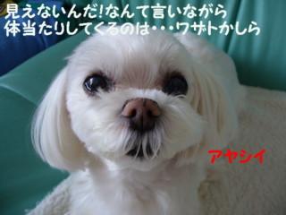 f0005727_20311170.jpg
