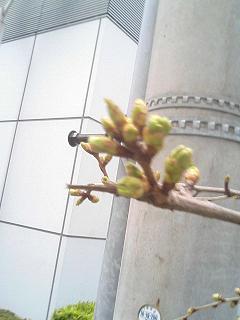 桜は まだかいな_e0013944_02837100.jpg