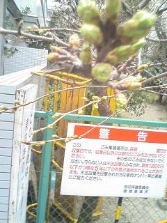 桜は まだかいな_e0013944_031319.jpg