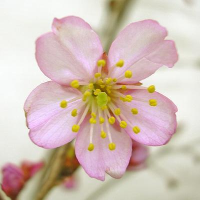 3月23日 桜模様_a0001354_21152774.jpg