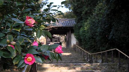 白毫寺の椿(春分の日)_b0008289_2143119.jpg
