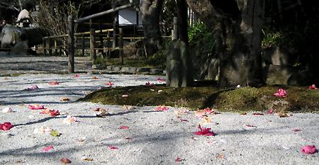 白毫寺の椿(春分の日)_b0008289_214587.jpg