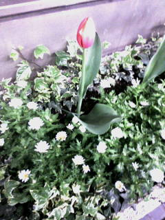 spring(^-^)_b0072293_20443851.jpg