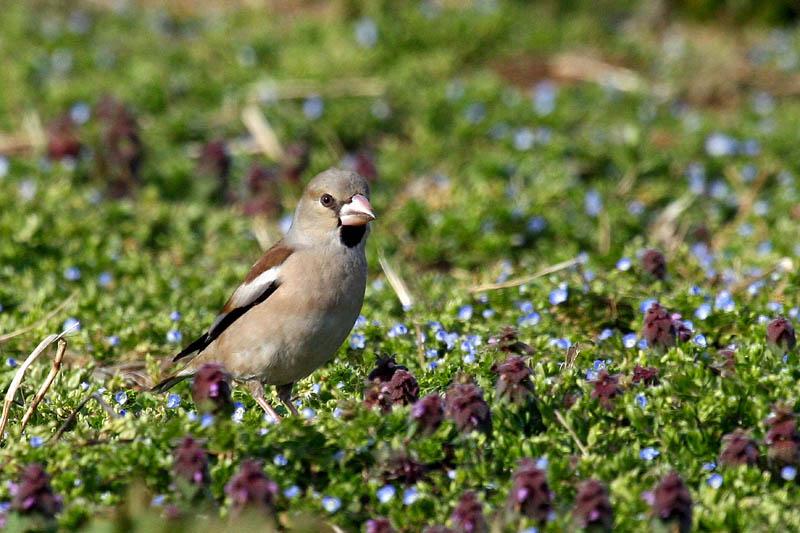 お花畑で餌を探します_b0024798_622439.jpg