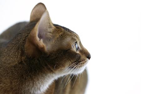 [猫的]レコードコンサート_e0090124_8241517.jpg
