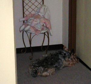 妹の部屋のドアの前で、隙間に鼻をくっつけてベターっとうつ伏せに寝そべっている状態。クンクンやって開けて~と催促のポーズです。