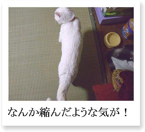 b0097145_0294342.jpg