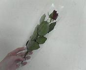 b0074746_0122185.jpg