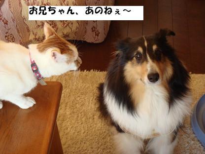 f0046854_7121573.jpg