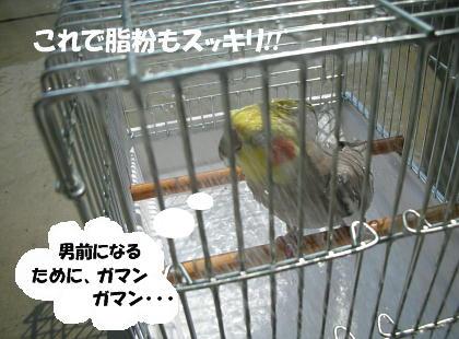 f0132055_0481095.jpg