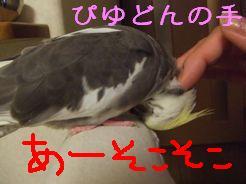 b0082757_048941.jpg