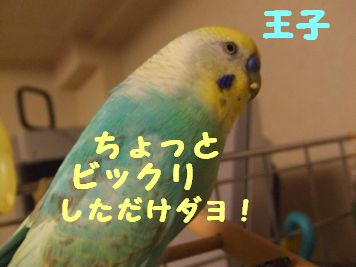 b0082757_0503533.jpg