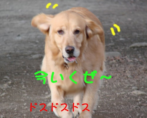 e0020166_7361416.jpg