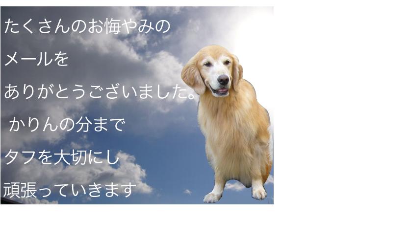 c0085188_2145982.jpg