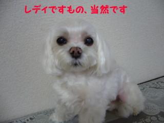 f0005727_170227.jpg
