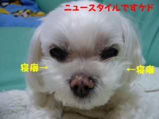 f0005727_1722672.jpg