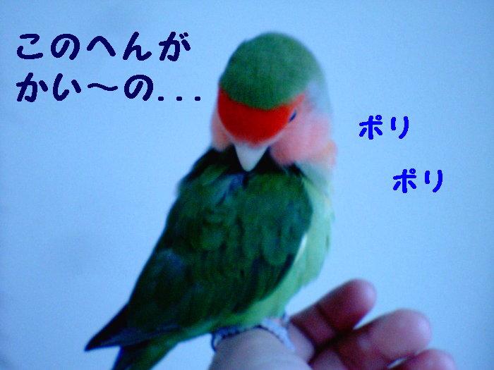 f0101344_1343128.jpg
